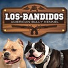 «LOS BANDIDOS» - Питомник Американских Булли