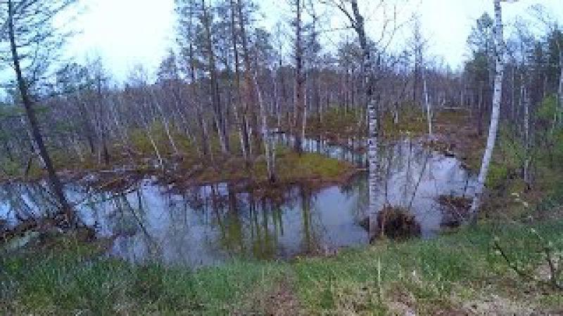 Ловля щуки на малых реках весной Весенняя рыбалка на живописной лесной речке