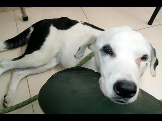 Собака умерла из-за разбитого сердца.