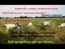 Первая козлятина поросята хозяйство огород дети в селе и пр