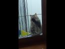 Впусти меня.