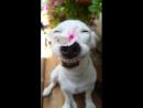 Счастливая собака