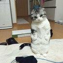 - Кот, сходи за меня на работу?