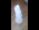 Кошка-матрешка