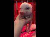 video (2)