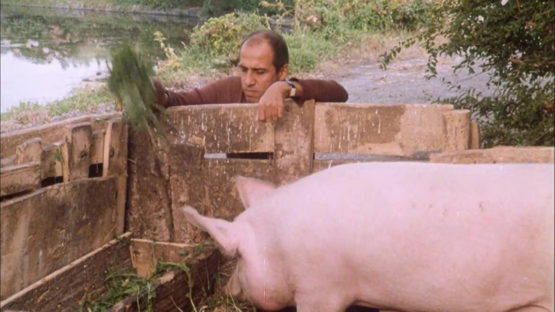 Укрощение строптивого Il bisbetico domato (1980) Италия