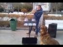 Поющая собака в Ялте