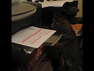 Почему котейки не работают в офисе