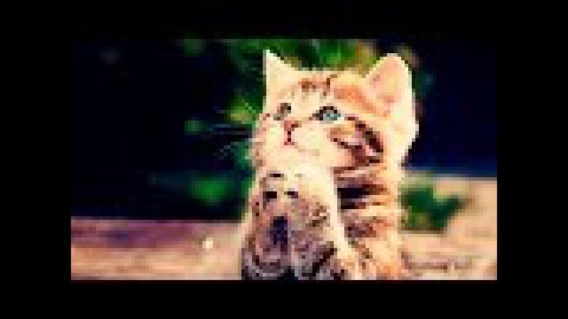 Котенок СИМУЛЯТОР мимимишки веселое РАЗВЛЕКАТЕЛЬНОЕ ВИДЕО для детей Мой Малень...