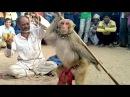 Haryanvi Bandar Bandriya Ka Khel - Funny Video   Comedy Video From My Phone