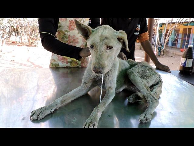 История спасения старой раненой собаки
