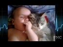 Коты няньки для маленьких детей