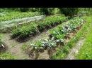Какие растения мульчировать в дождливое и холодное лето