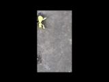 skateboarding with...Praying mantis