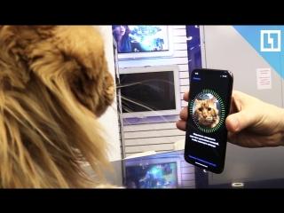 Кот тестирует FaceID