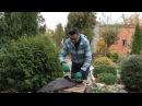 Как обрезать крыжовник и смородину черенковать розы Хранение георгинов