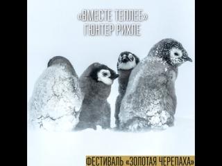 «Золотая Черепаха» — Вместе Теплее, Гюнтер Рихле