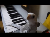 Joe HisaishiTonari No Totoro (OST Мой сосед Тоторо)