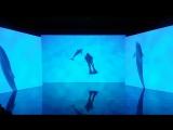 """Выставка """"Как и ты. Человек и дельфин"""""""