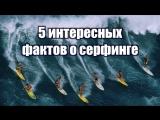 5 интересных фактов о серфинге
