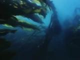морская водоросль ламинария - ООО Нефрит 8 800 700 90 24