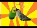 Ivona MaximПопугаи идиоты Пытаються разобраться с хйней Угар нарезка угарная попугаи с матом