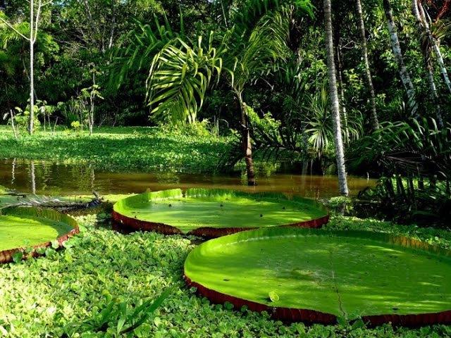 Красивые Джунгли Южной Америки.