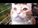 Смешные кошки Приколы КОТ 0081