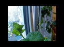Тайная жизнь домашних растений