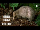Kiwi, Kea, Weka and other birds of New Zealand - Serious Biology for Kids 7