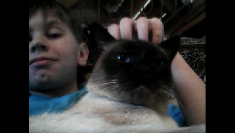 Мася тётена кошка