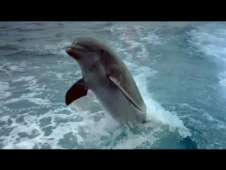 The Beauty Of Dolphins.