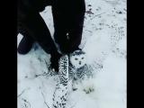 Необычная гостья забрела к охотникам в Якутии (VHS Video)