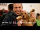 Дрессировка собак. Английский кокер-спаниель Рада, возраст 5 мес