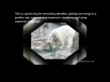 Winter POLAR BEAR kids action songs for Music Therapy 4 toddlers, preschoolers, kindergarten ...