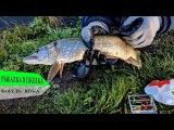 Мега рыбалка в ЗАО