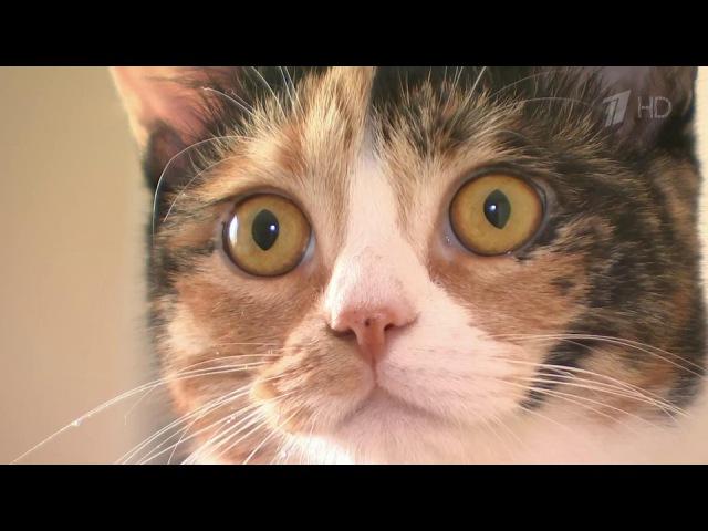 Винтернете расплодились фальшивые ветеринарные клиники: дорого иопасно для жизни питомца. Новости. Первый канал