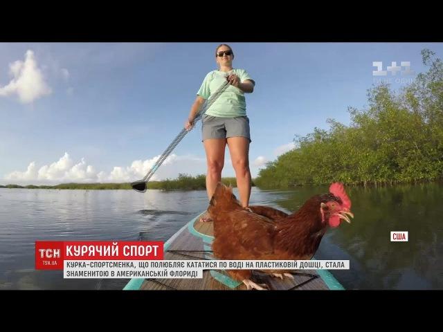 Курка Лоретта стала зіркою у Флориді через своє захоплення кататися на дошці
