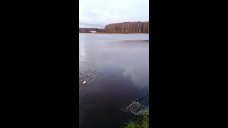 Рыбалка в Высоково 16.11.17