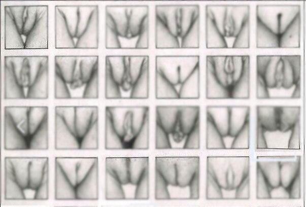 женские органы виды в картинках