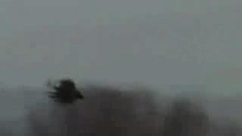 Охота на фазана с легавыми собаками (подборка моментов)_low.mp4