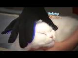 Супер ХИТ - перчатка против шерсти