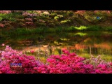 EDWARD SIMONI - Enchanted World (amazing pan flute music)