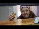 Пьяная бабка в ломбарде ищет мужика