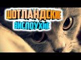 Мимимишные шотландские котята