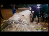 Whale Carcass Found In Dinagat Islands, Philippines