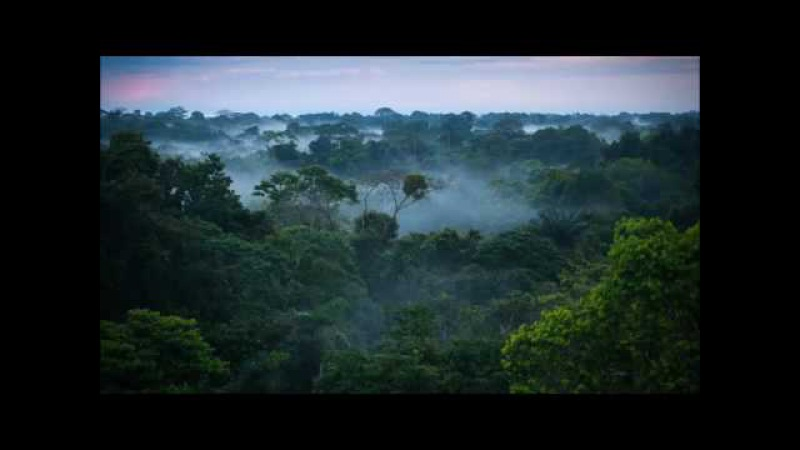 Los Mirlos Sabor a Selva Dj Caution remix