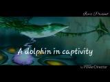 Ecco the dolphin, defender of the future - Entrapment music