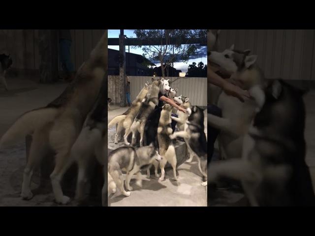 Homem-cão é recebido por seus amigos em casa