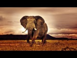 African Instrumental Relaxing Background Music  Wild Atmosphere  Calm Music, Soft Music - 1 HOUR.